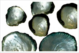 mother-of-pearl-shells